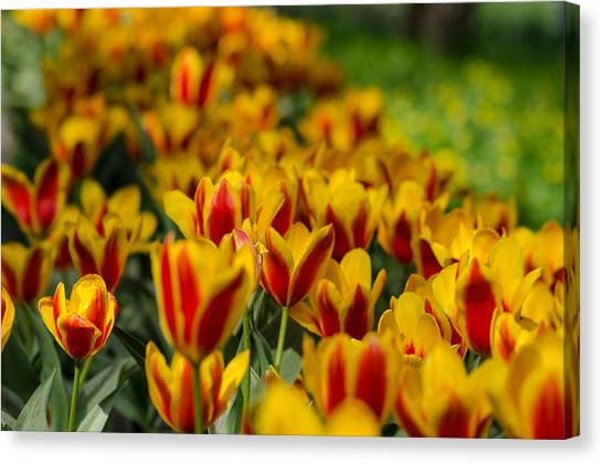 Spring Mood Canvas Print