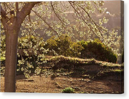 Spring Morning Light Canvas Print