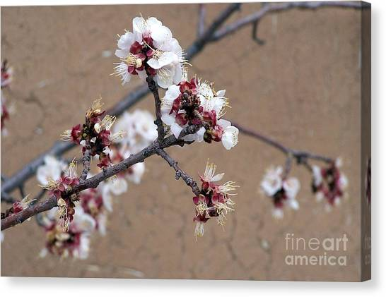 Spring Promises Canvas Print
