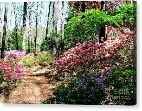 Dirt Road Canvas Print - Spring Road by Shijun Munns
