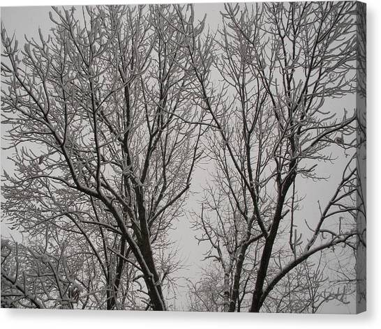 Spring Snow Canvas Print by Suzanne Fenster