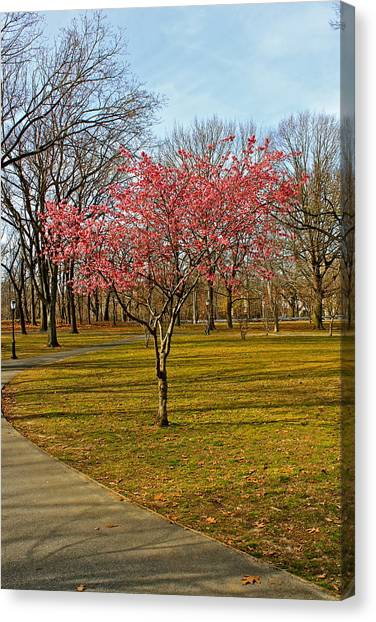 Spring Tree Blooms  Canvas Print