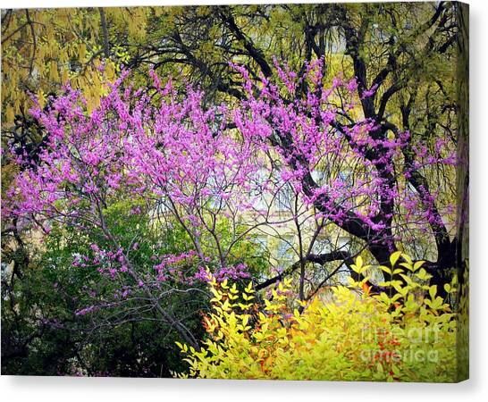 Spring Trees In San Antonio Canvas Print