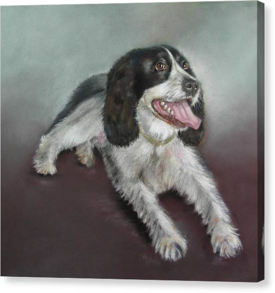 Springer Spaniel Canvas Print