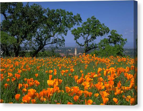 Springtime At Stanford Canvas Print