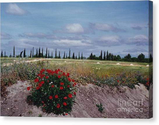 Springtime In Spain Canvas Print by Barbara Plattenburg