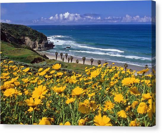 Springtime On The Headlands Canvas Print