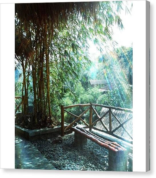 Bamboo Canvas Print - #squaready by Mieke Cb