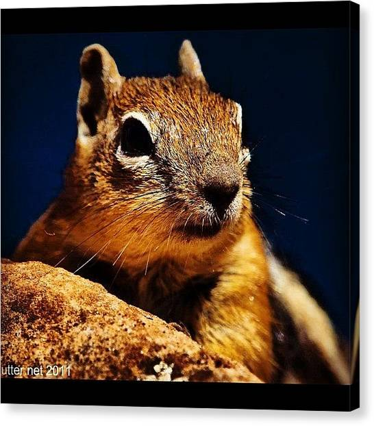 Mice Canvas Print - #squirell #mice #animals #wild #scene by Artistic Shutter