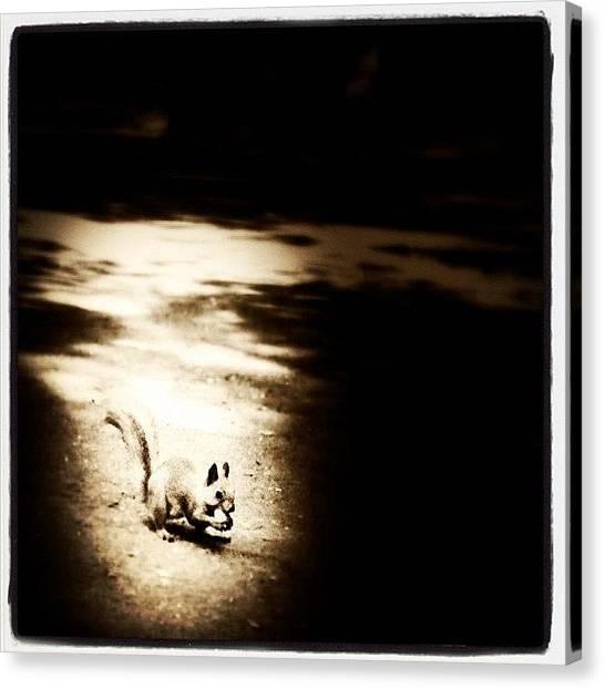 Hunting Canvas Print - #squirrel #animal #life #park #ukraine by Odarka Shevchenko