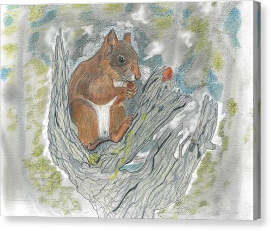 Squirrel Canvas Print by Don  Gallacher