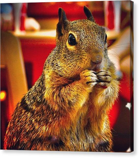 Squirrels Canvas Print - Squirrel by Ernesto Cinquepalmi