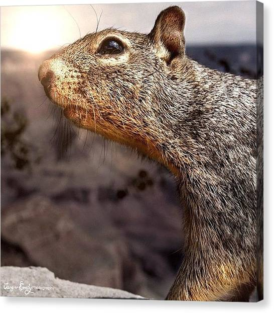 Grand Canyon Canvas Print - Squirrel In Front Of The Grand Canyon by Jane Emily