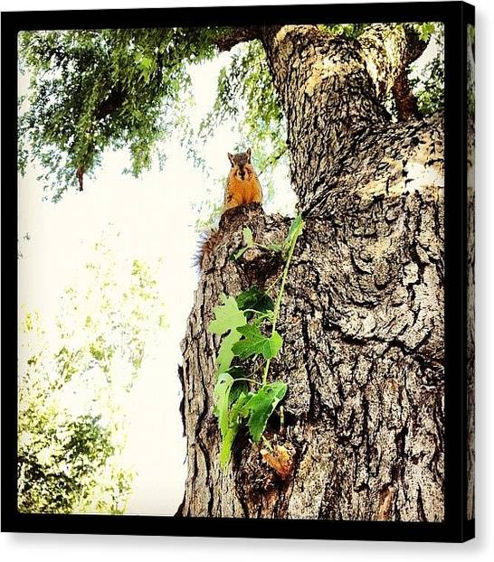 Large Birds Canvas Print - Squirrel! by Marc Crow
