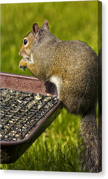 Squirrel On Seed Tray Canvas Print by Bill Tiepelman