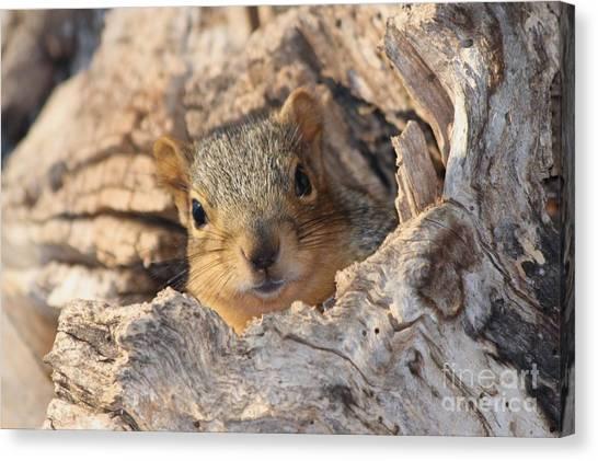 Canvas Print - Squirrel Peaking by Lori Tordsen