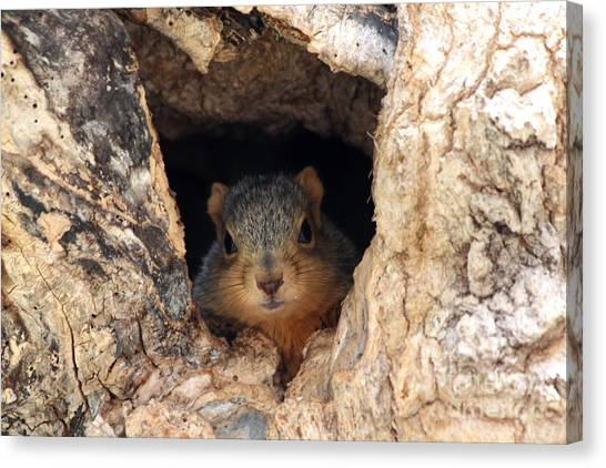 Canvas Print - Squirrel Peaking Out From The Den Hole by Lori Tordsen