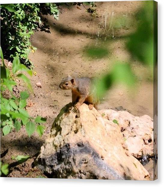 Squirrels Canvas Print - Squirrel!! by Rhonda L