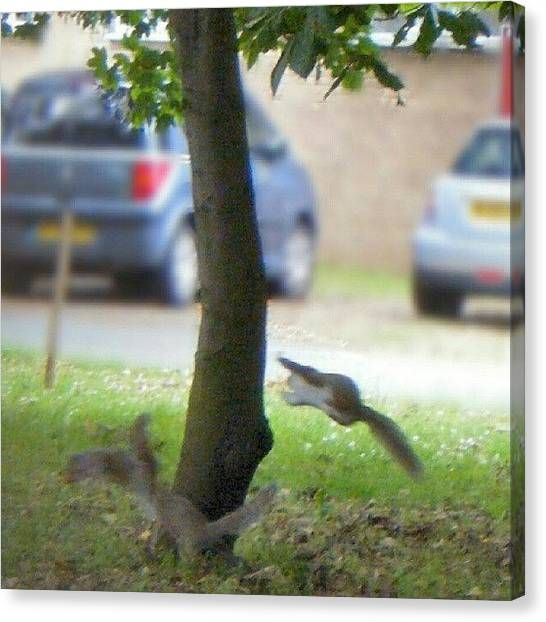 Squirrels Canvas Print - #squirrel #squirrels #jumping #playing by Kevin Zoller