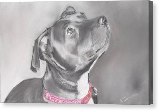 Staffordshire Terrier  Canvas Print by Karl Simpson