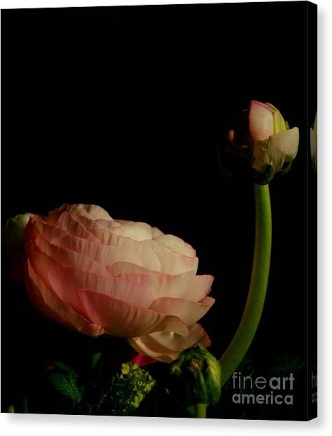 Stalking Petals In The Dark Canvas Print