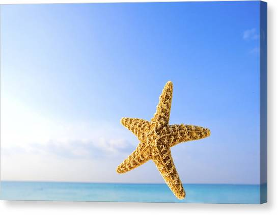 Starfish Canvas Print - Starfish In Front Of The Ocean by Richard Wear