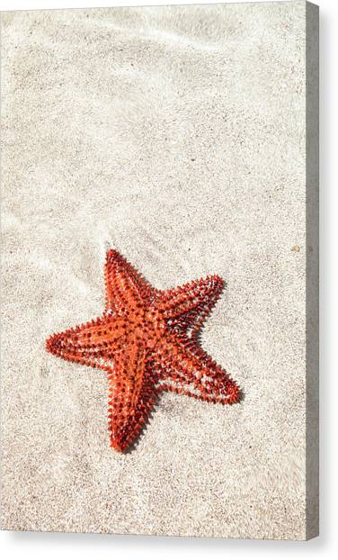 Starfish Canvas Print - Starfish Under Water by Matteo Colombo