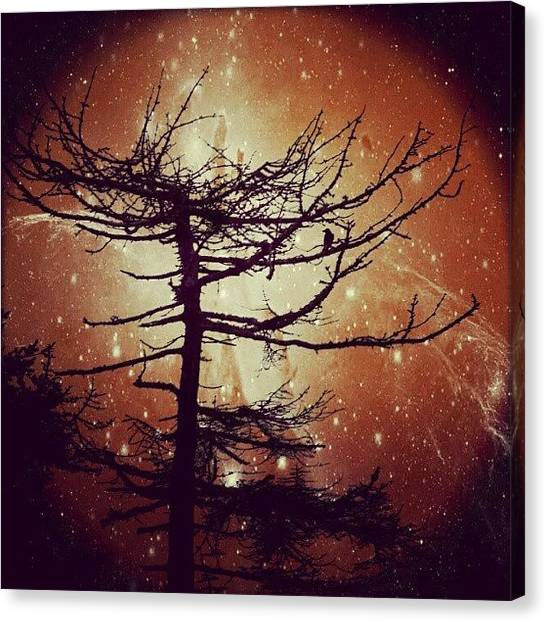 Starry Night Canvas Print - Starry Night by Alexandra Cook