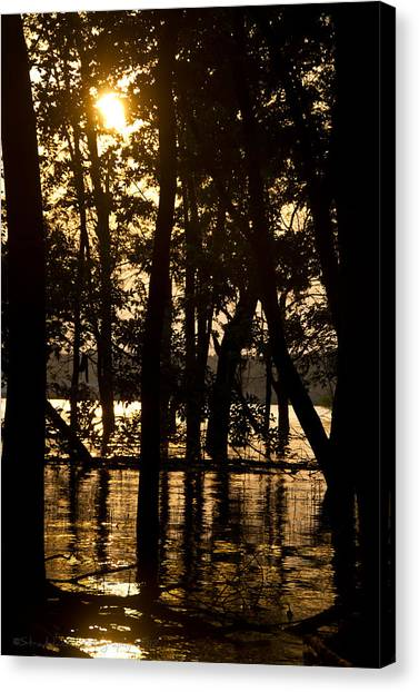 Stay Gold Canvas Print by Straublund Photography