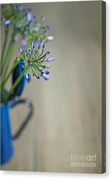 Onions Canvas Print - Still Life 02 by Nailia Schwarz