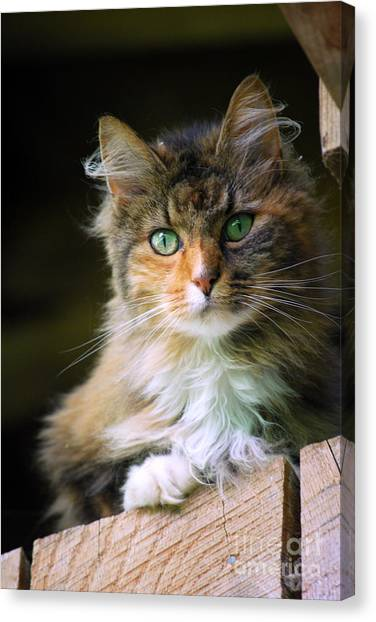 Stinks Barn Cat Canvas Print