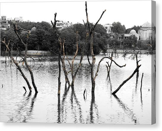 Stomps Of Trees In A Lake Canvas Print