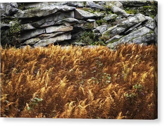 Stone Wall And Fern Canvas Print