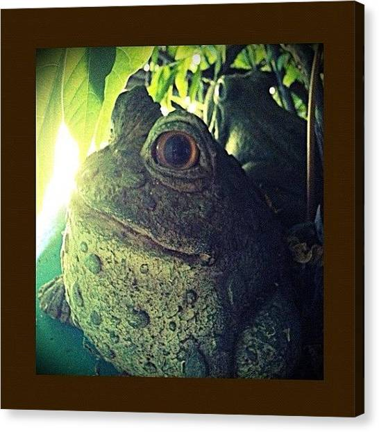 Frogs Canvas Print - Stoned Toady by Mike Maginot