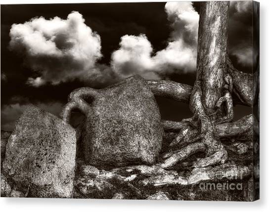 Stones And Roots Canvas Print