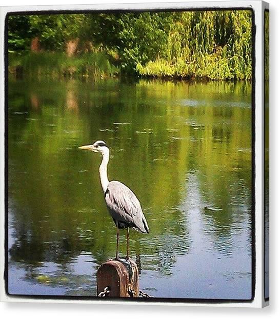 Storks Canvas Print - #stork #hydepark #london #summer #bird by Skye Park