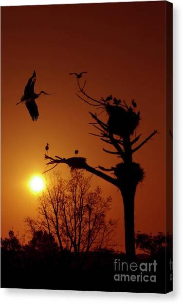 Storks Canvas Print - Storks by Carlos Caetano