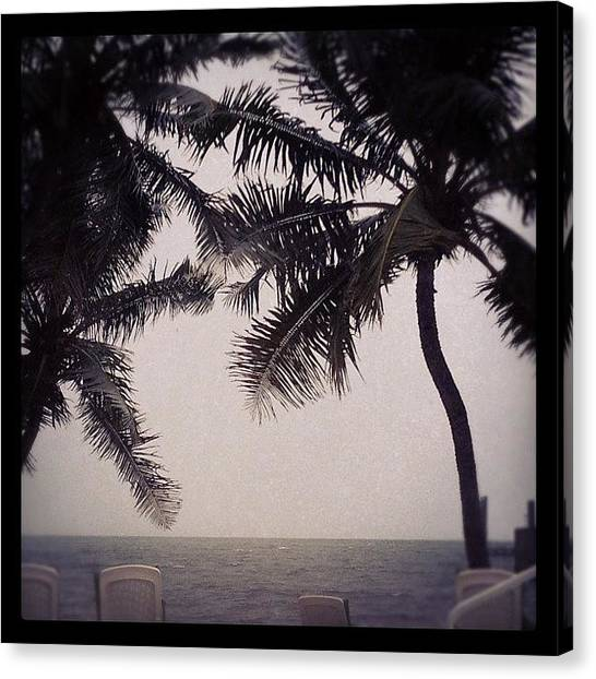 Palm Trees Canvas Print - Storm's A Comin' by Michele Green Williams