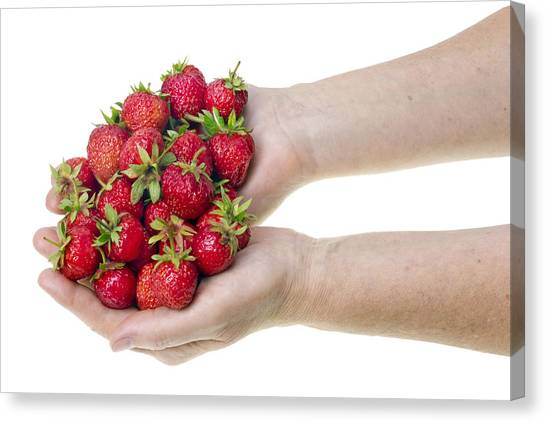 Strawberries In Hands Canvas Print