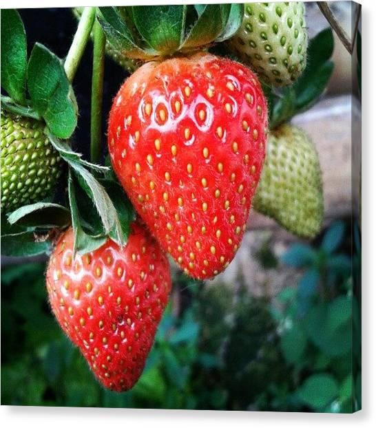 Liquor Canvas Print - Strawberry #fruit #fresh by Gin Zhao Yun