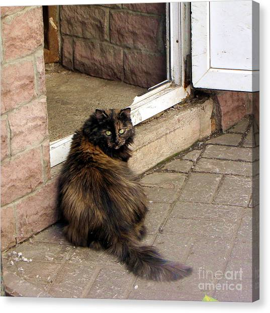 Street Cat Canvas Print