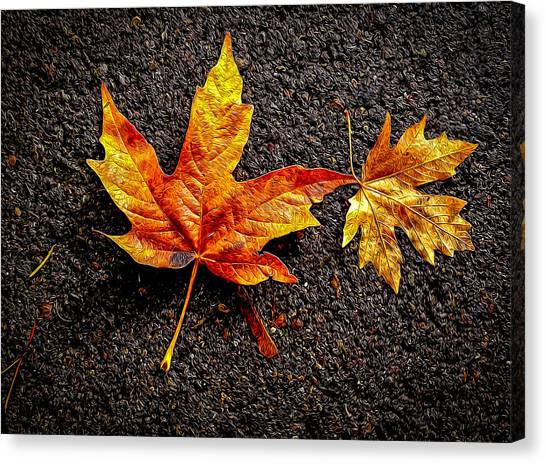 Street Leaf Canvas Print