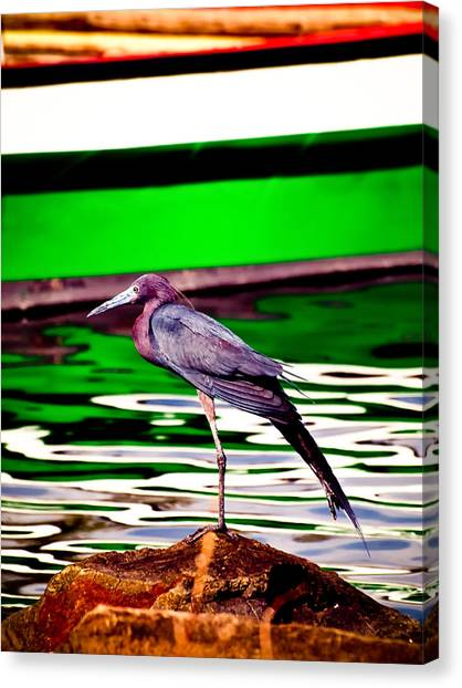 Stretching Bird Canvas Print