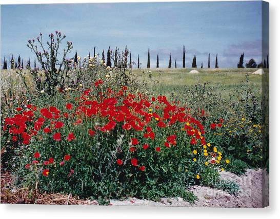 Striking Spanish Scenery Canvas Print by Barbara Plattenburg