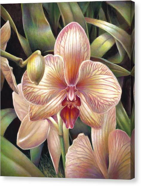 Striped Peach Orchid Canvas Print