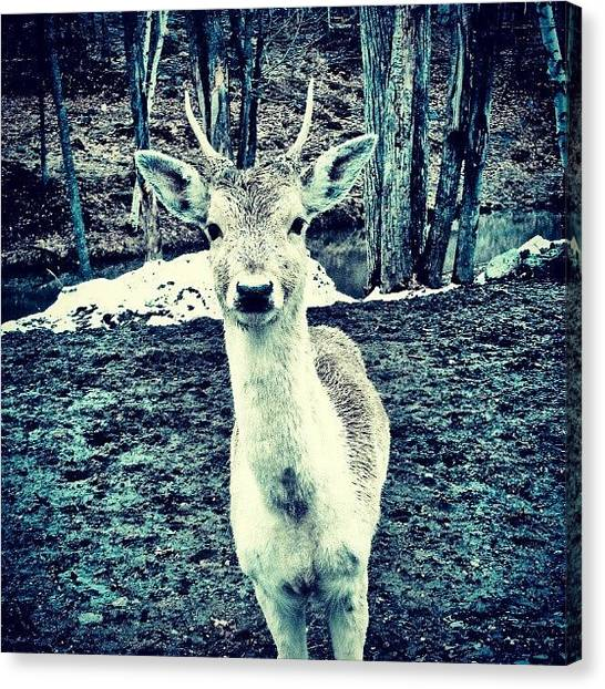 Hunting Canvas Print - Struckt  by Kev Thibault
