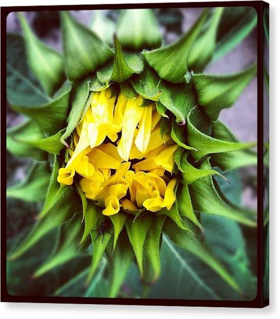 Florals Canvas Print - Stuck In The Middle by Gwyn Newcombe