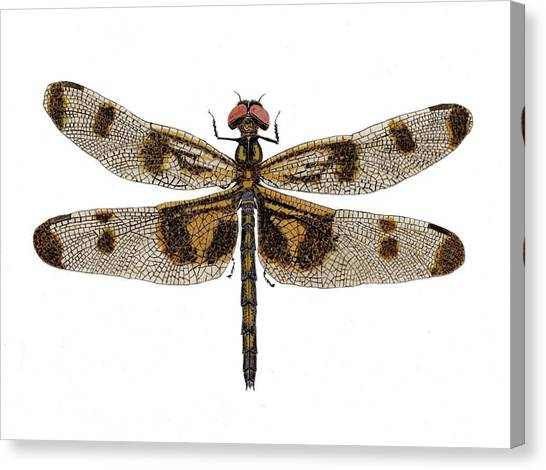Study Of A Banded Pennant Dragonfly Canvas Print