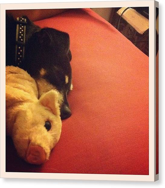 Thanksgiving Canvas Print - #stuffedanimal #puppy #dog #sleeping by Anna Hancock