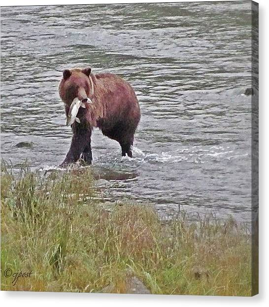 Salmon Canvas Print - Success! Brown Bear Salmon Fishing Sept by Cynthia Post